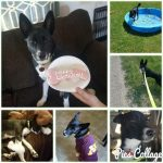 Happy Tails Dog Rescue Hours