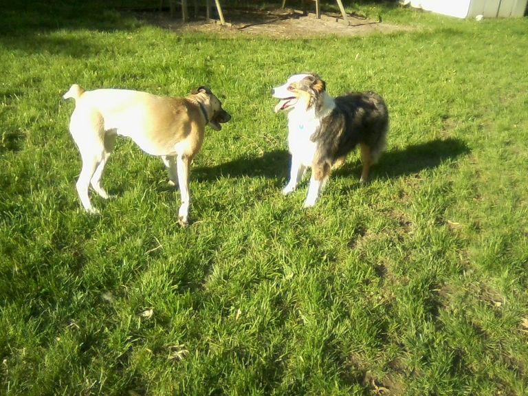 Hazel Eyes Dog Rescue Website