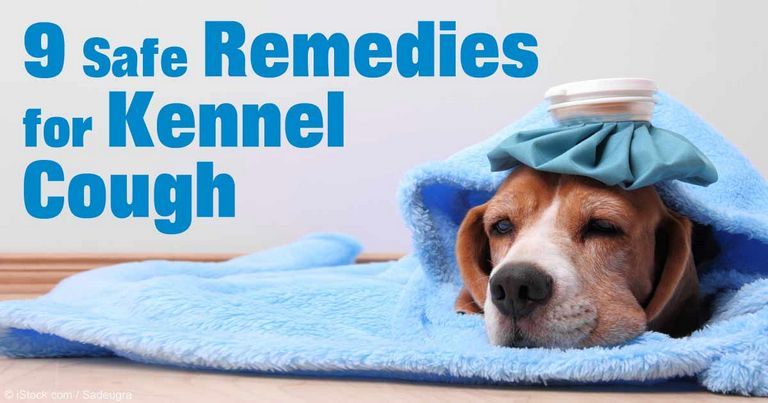 Honey For Kennel Cough