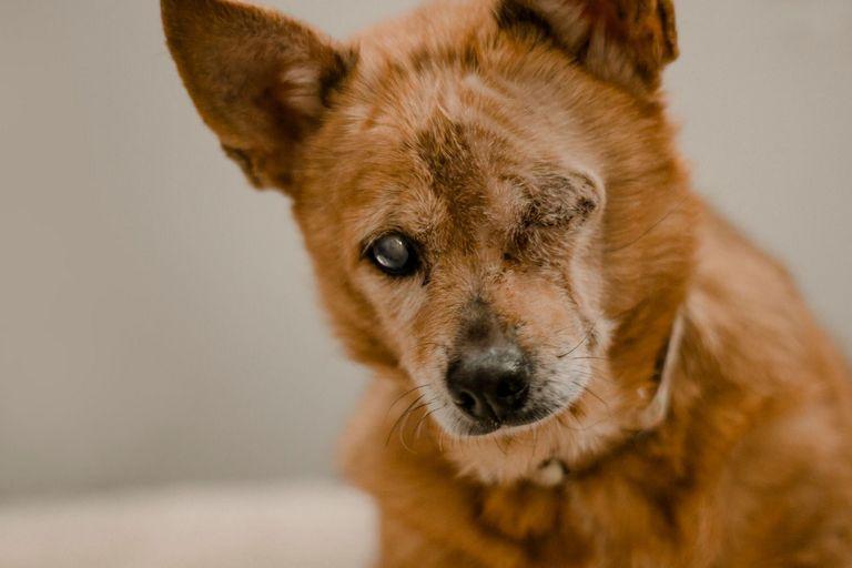 Hope Animal Rescue Durham