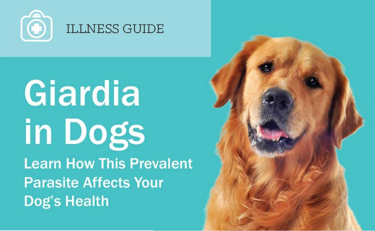 How Long Does It Take For Panacur To Work On Giardia