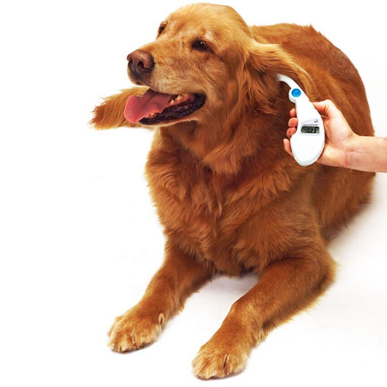 How To Take A Dog's Temperature With A Digital Thermometer