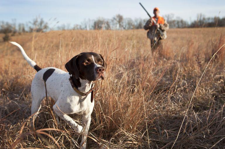 Hunting Dog Rescue Colorado