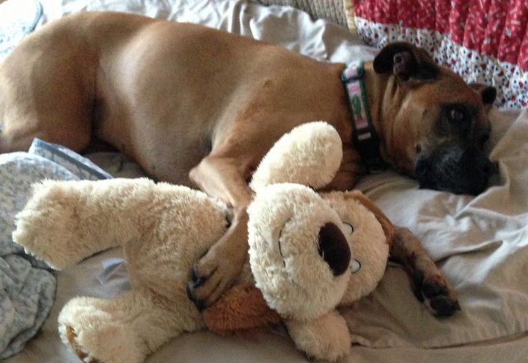 I Heart Dogs Blog