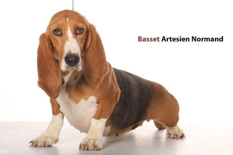 Is Elite Basset Hounds A Puppy Mill