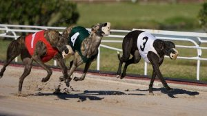 Jacksonville Greyhound Racing Programs