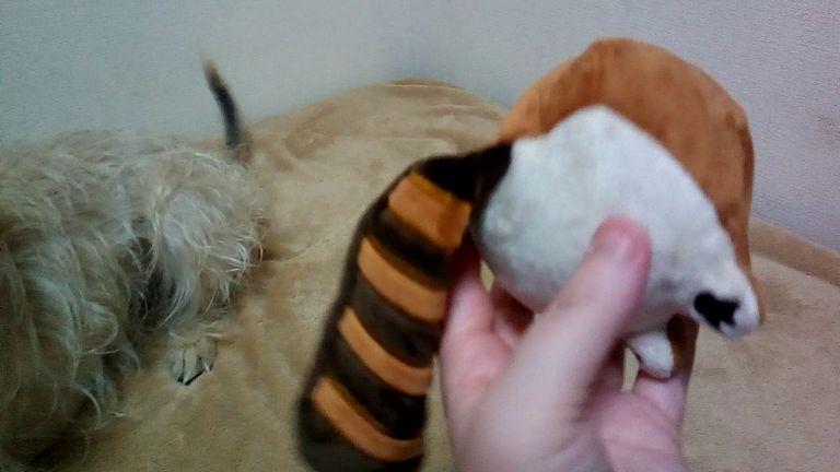 Japanese Toy Dog