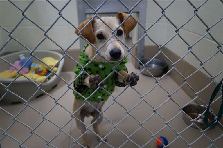 Johnson City Tn Animal Shelter