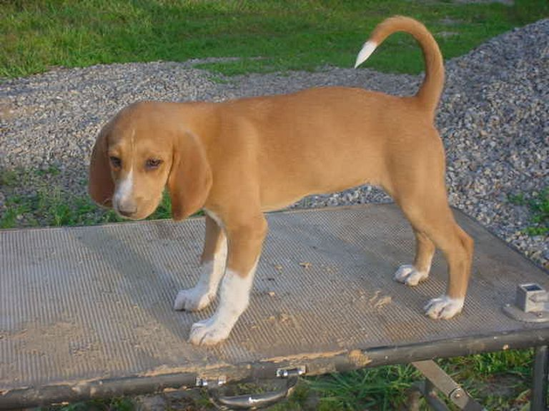 July Hounds For Sale