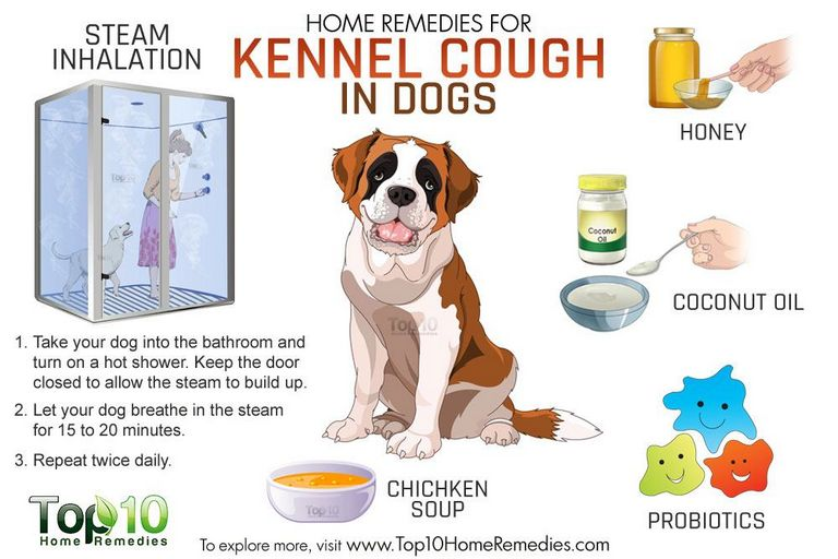 Kennel Cough Antibiotics Dosage