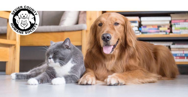 Knox County Humane Society Tn