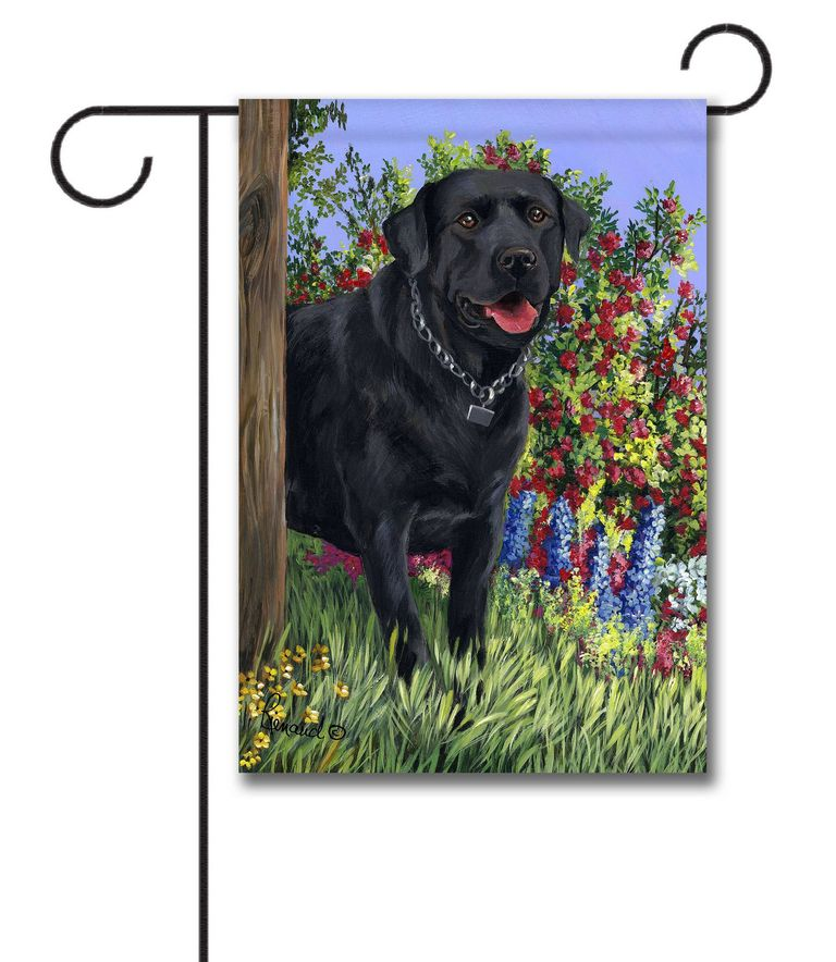 Labrador Puppies Flagstaff Az