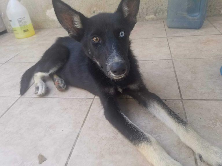 Lakewood Ca Dog Adoption