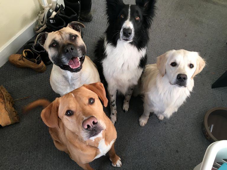 Large Dog Rescue Nebraska