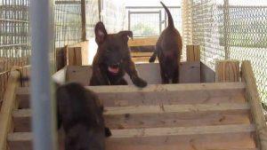 Logan Animal Shelter