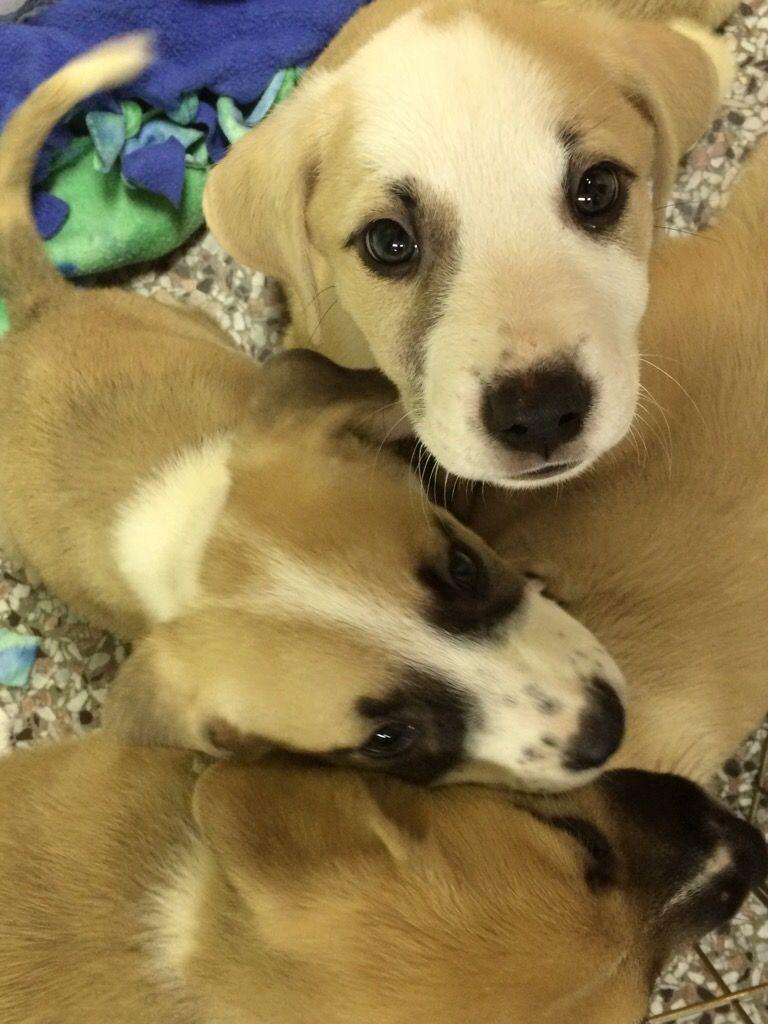 Madison County Humane Society Ga