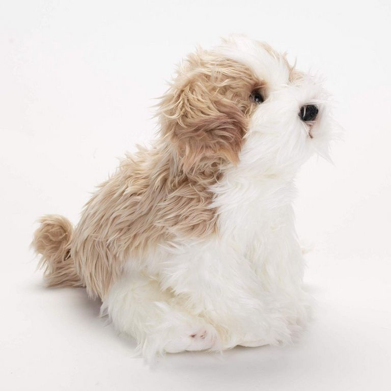 Maltipoo Puppies For Sale Pa