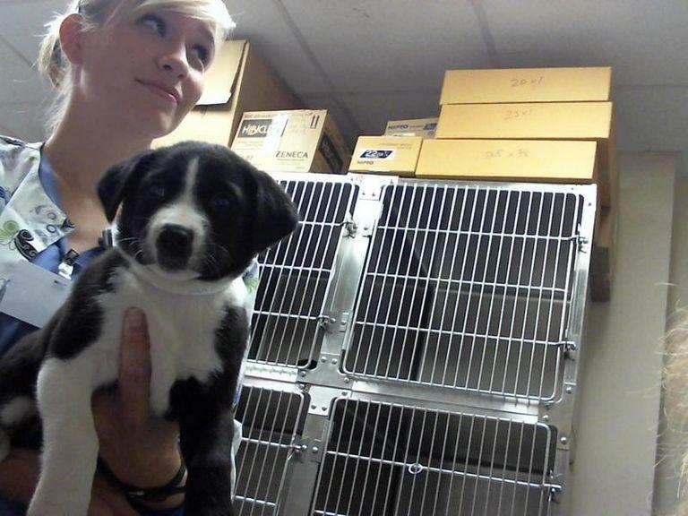 Maury County Animal Shelter