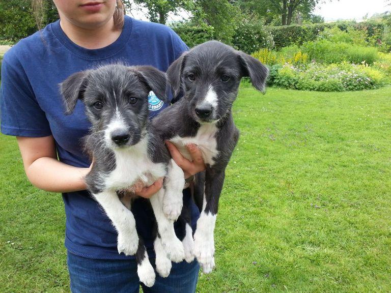 Medium Puppies For Sale