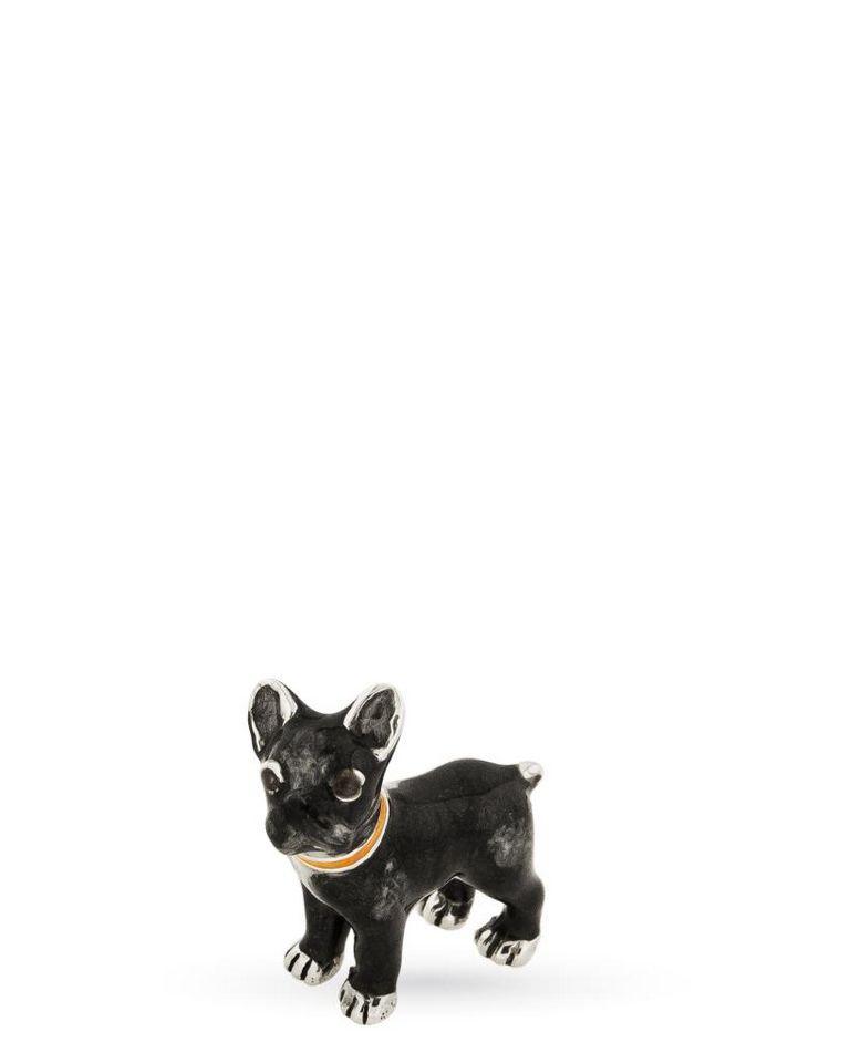 Mini French Bulldog Full Grown