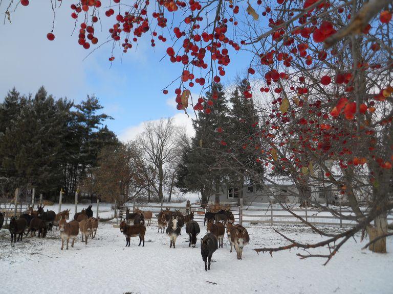 Miniature Donkeys For Sale In Nebraska | Top Dog Information