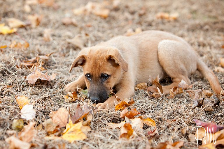 Mixed Breed Puppies For Sale In Ct.