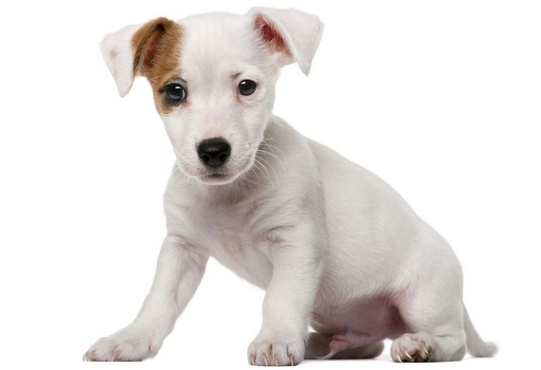 Mixed Breed Puppies For Sale Nj