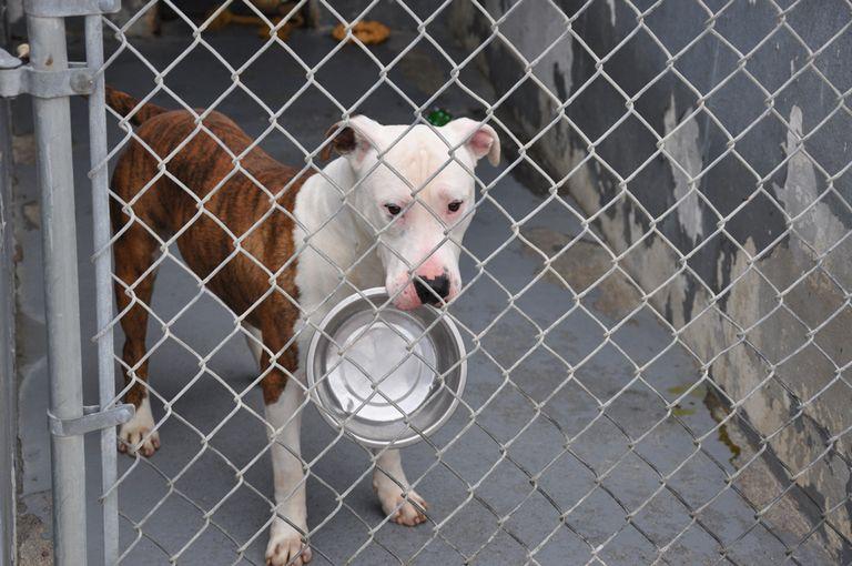 Montgomery County Animal Care And Adoption Center Christiansburg, Va