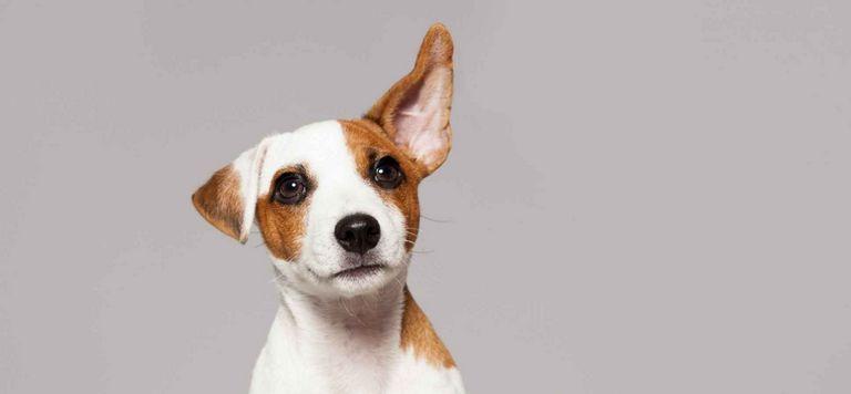 Most Empathetic Dog Breed