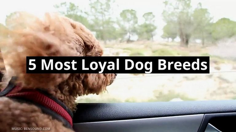Most Loyal Pets
