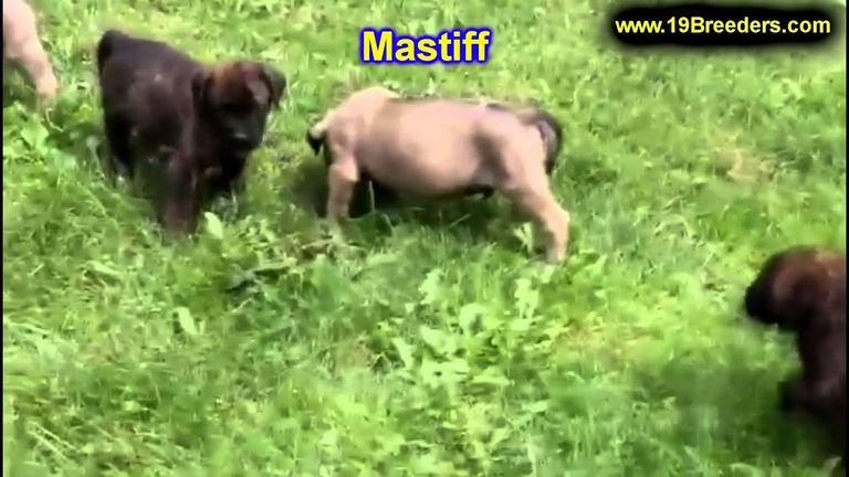 Ne German Shepherd Rescue