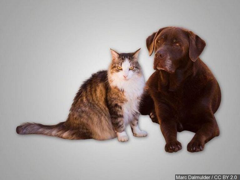 New Hanover County Animal Shelter