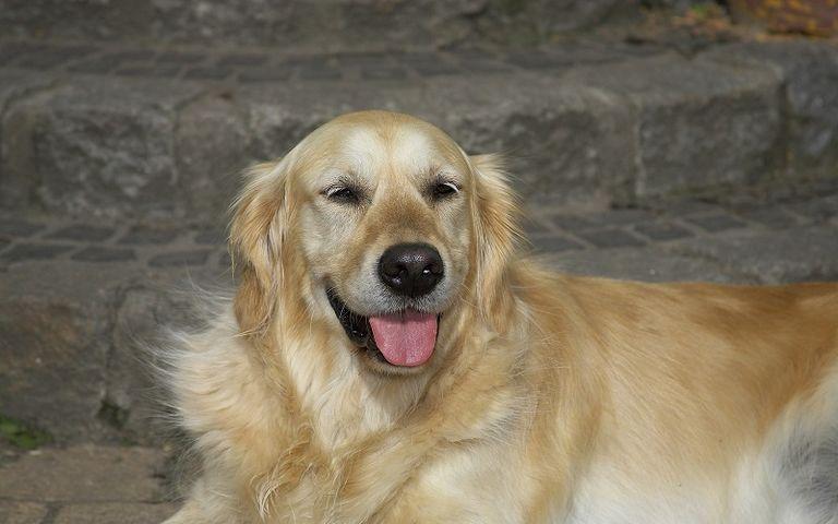 Normal Weight Of Dog Spleen