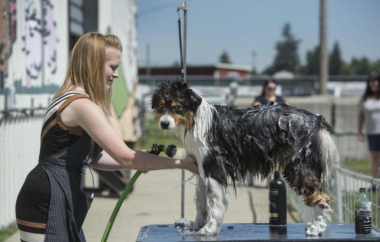 North Idaho School Of Dog Obedience Hayden Id