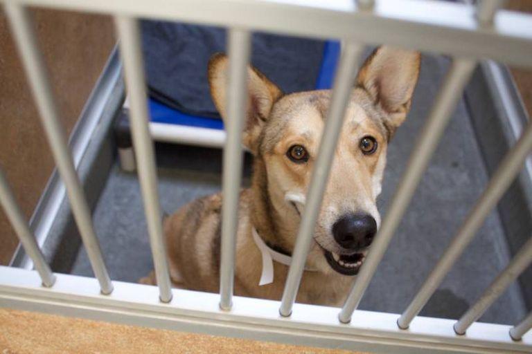 Northern California Humane Society