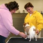 Obedience Classes Richmond