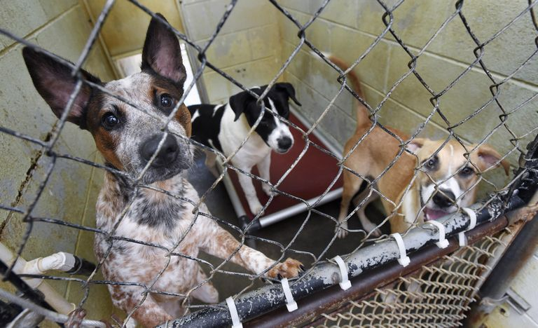 Okaloosa County Animal Shelter