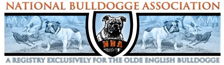 Olde English Bulldogge For Sale In Michigan