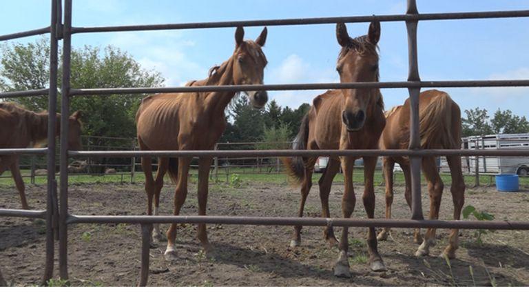 Omaha Horse Rescue