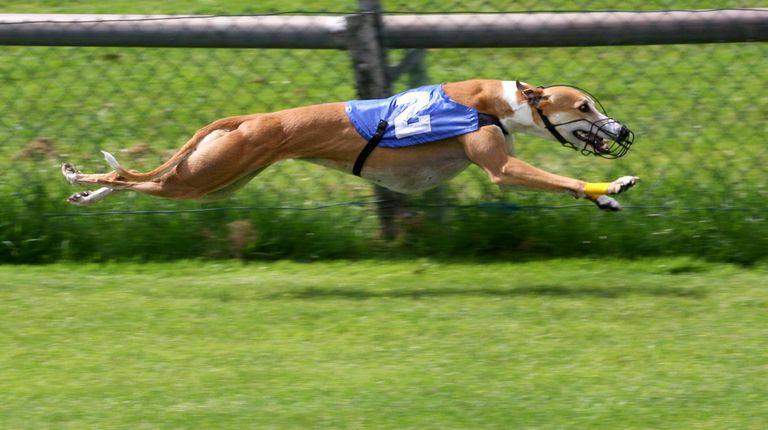Orange Park Greyhound Program