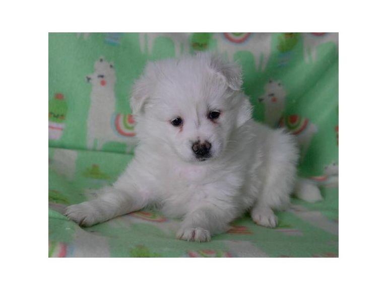 Orlando Craigslist Pets | Top Dog Information