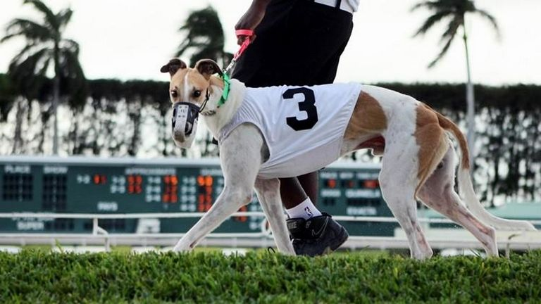 Palm Beach Kennel Club Results