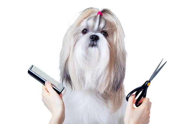 Paparazzi Dog Grooming