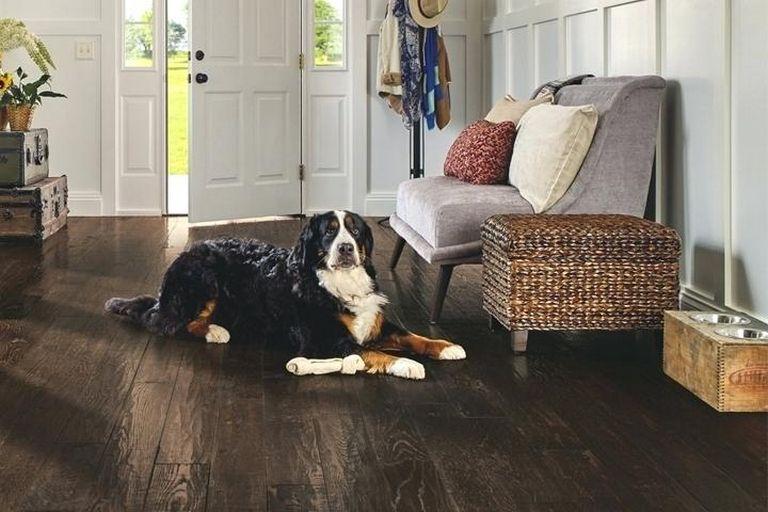 Pet Friendly Flooring Home Depot