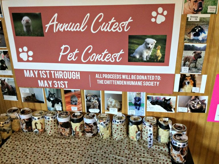 Pet Photo Contest For Money
