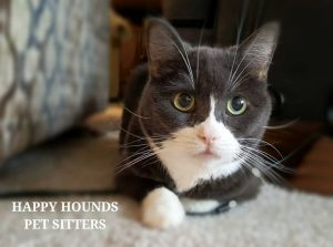 Pet Sitters Midland Tx