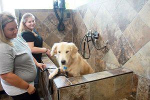 Pet Stores In Kokomo Indiana