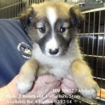 Petfinder Wichita Ks