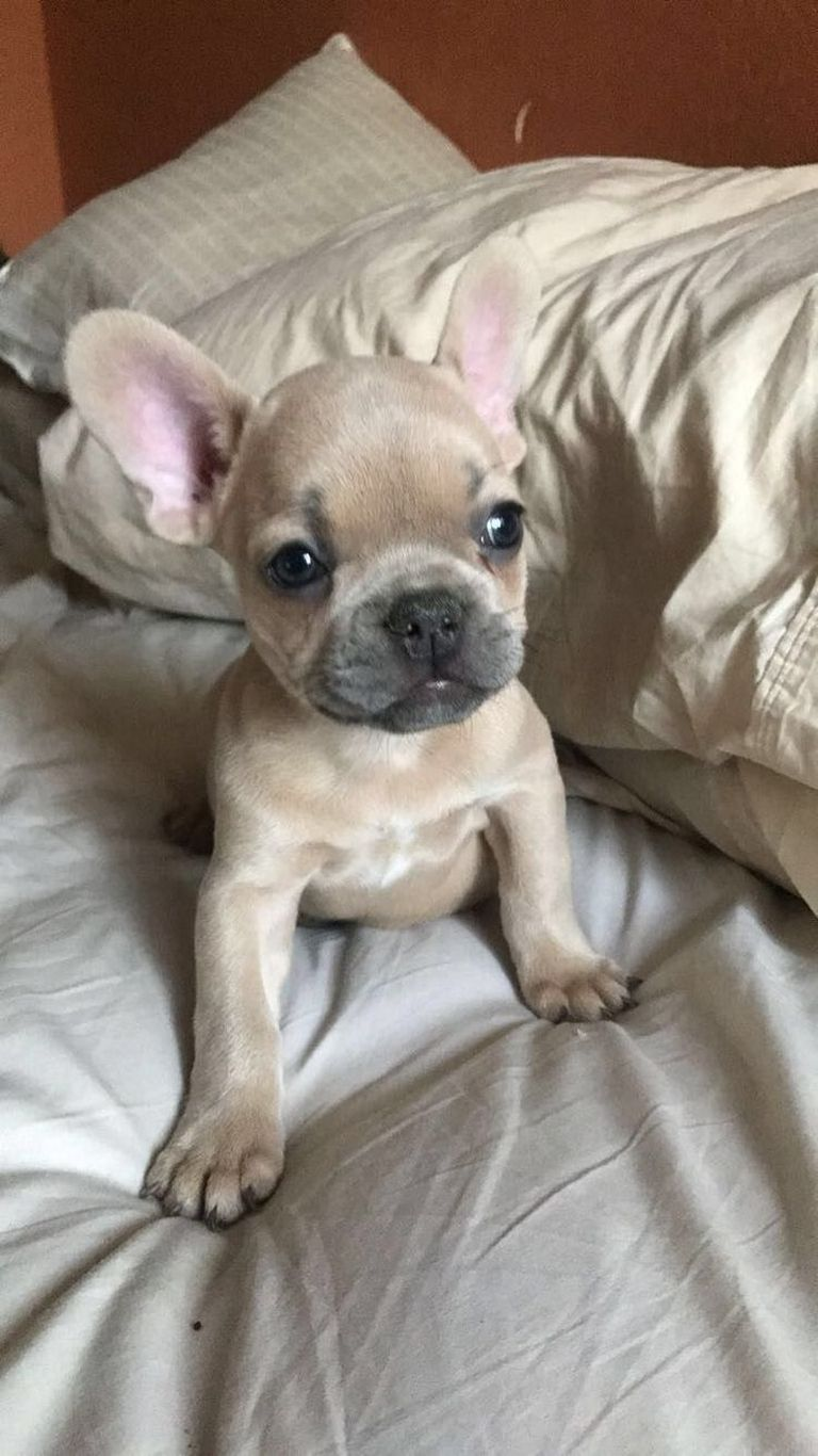 Pets Craigslist Wisconsin | Top Dog Information
