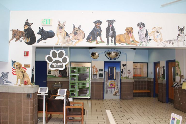 Pinellas County Animal Services Adoption Fee